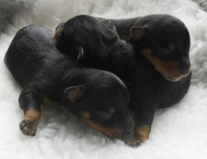 new puppies 2015 Day 1