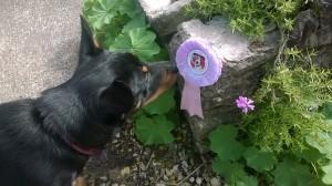 Dora's first rosette