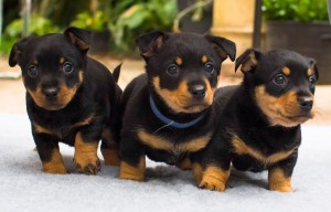 The Return of the Native litter - July 2015
