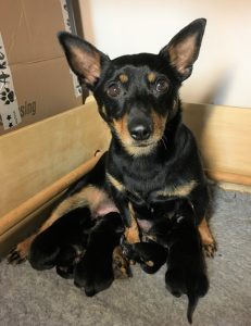 Dora with pups